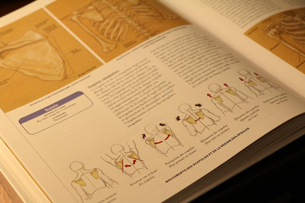 livre anatomie épaule