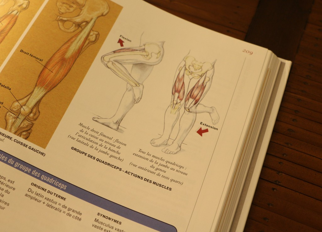 livre anatomie cuisse