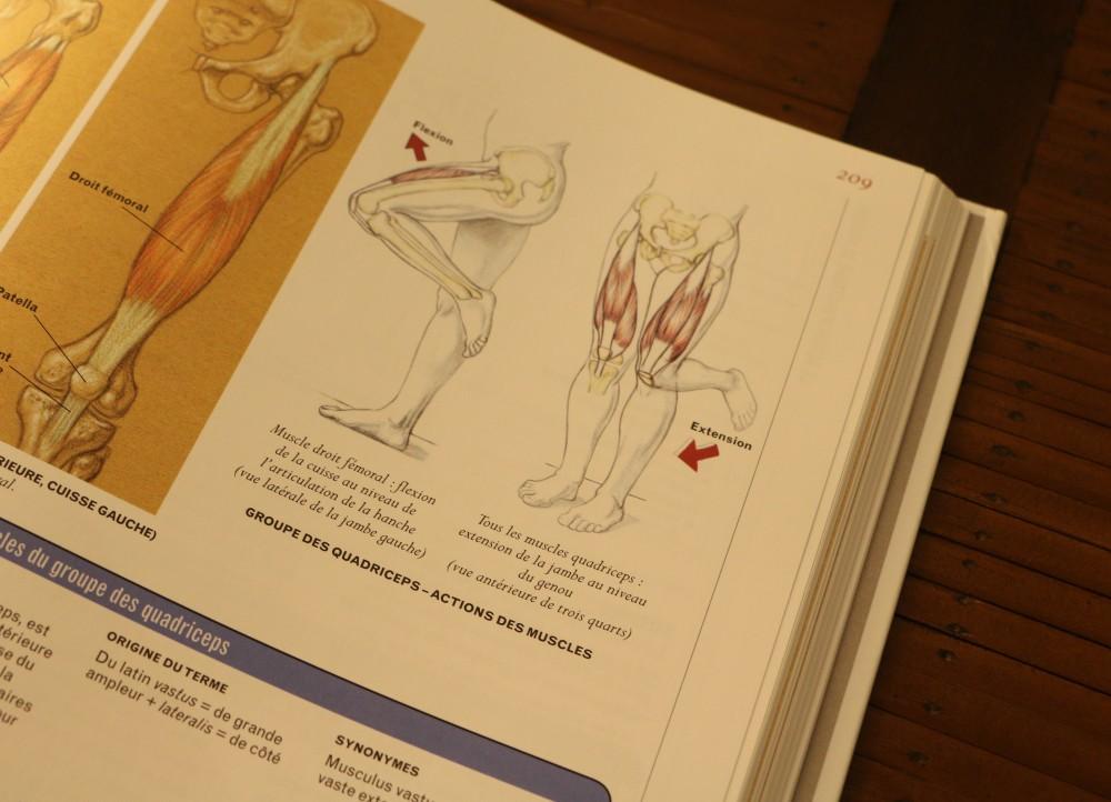 livre-anatomie-corps-humain-artistique-05