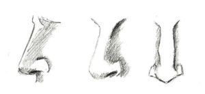 formes du nez masculin