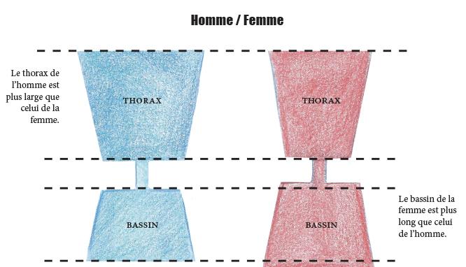 Comparaison du torse de l'homme et de la femme