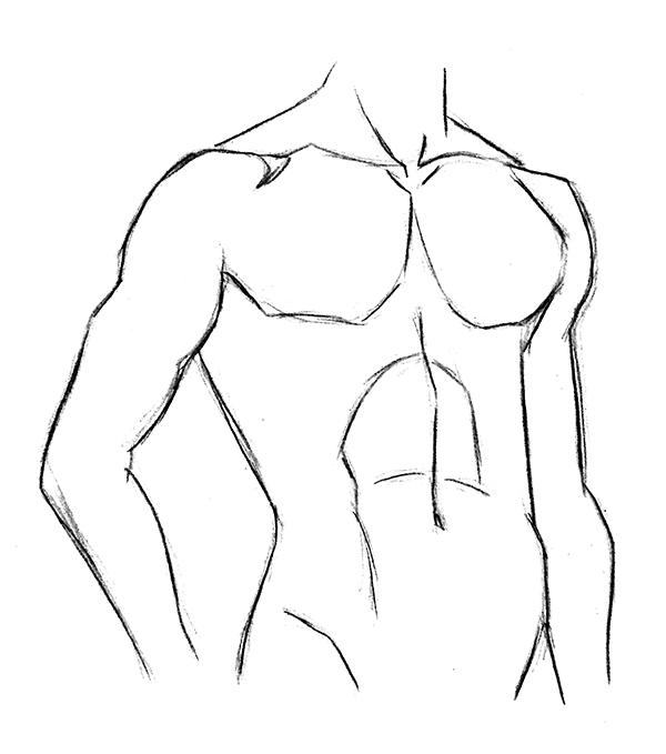 dessin de torse masculin