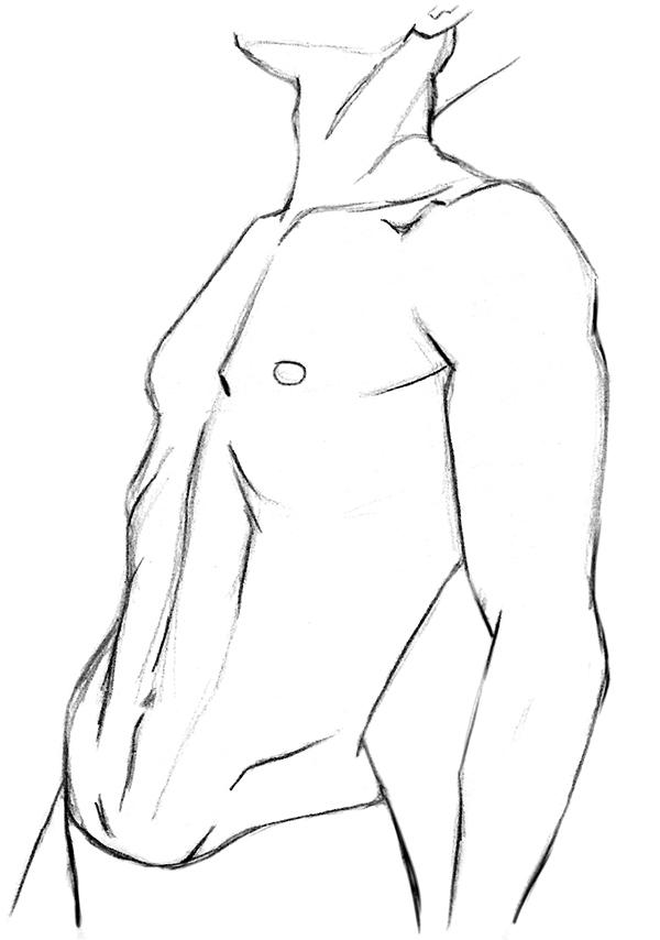 dessin de torse masculine vu aux trois quarts