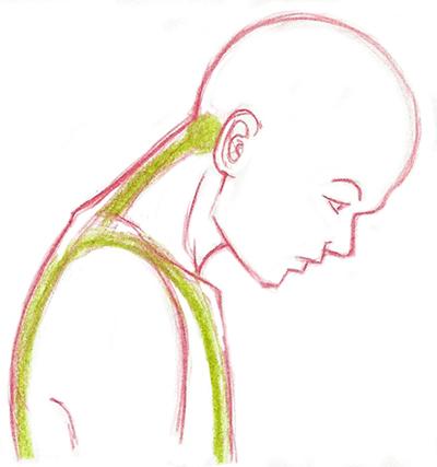 Les vertèbres cervicales vues tête baissée